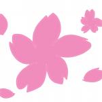 三浦海岸桜まつりルポ!今が見頃、早咲きの河津桜!