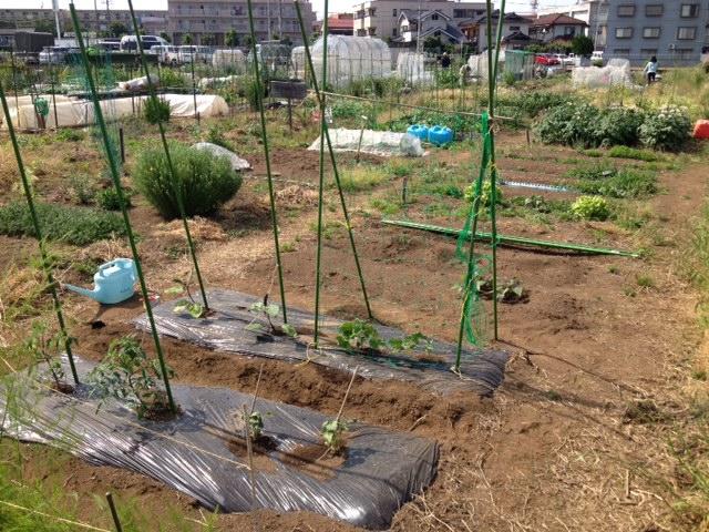 初めての農作業ルポ第2弾~苗を植える編~